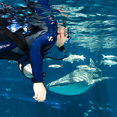 Dive with Whale Sharks